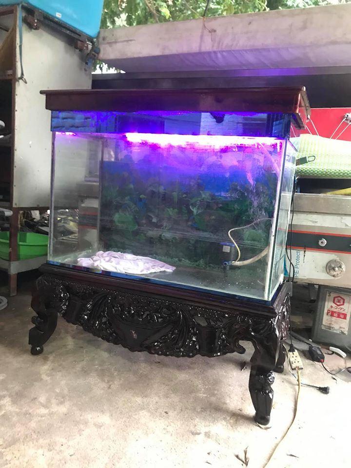 Bể cá gia đình